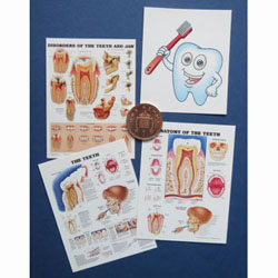 4 Dental Posters