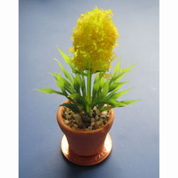 Yellow Flower in Terracotta Pot